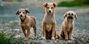 Straßen Hunden in Thailand ein zuhause geben, dafür werde ich mich einsetzen bei meinen nächsten Besuch in Thailand im September